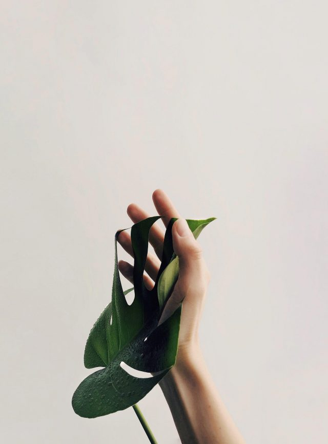 Image by Daria Shevtsova